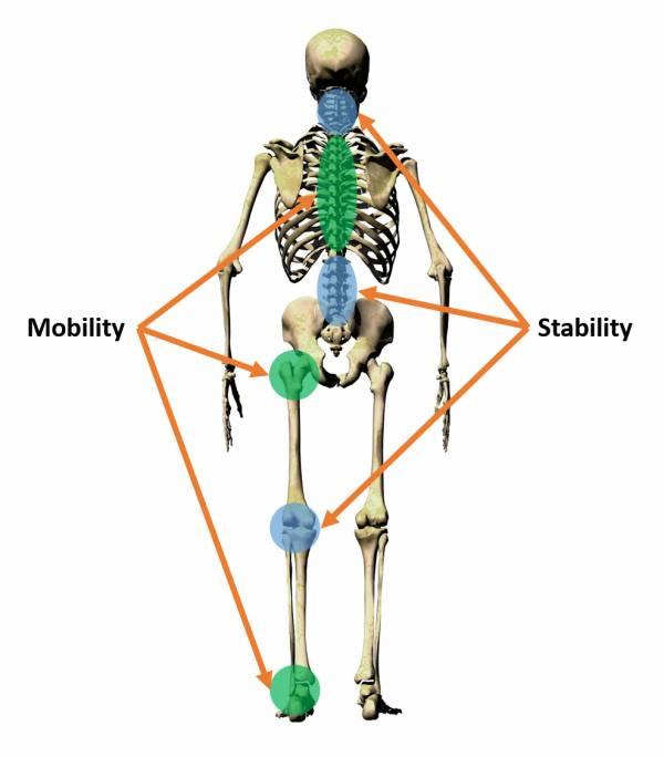 mobilitystabilityspine.jpg